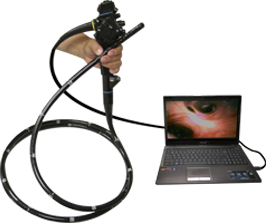 endoscope for large animals