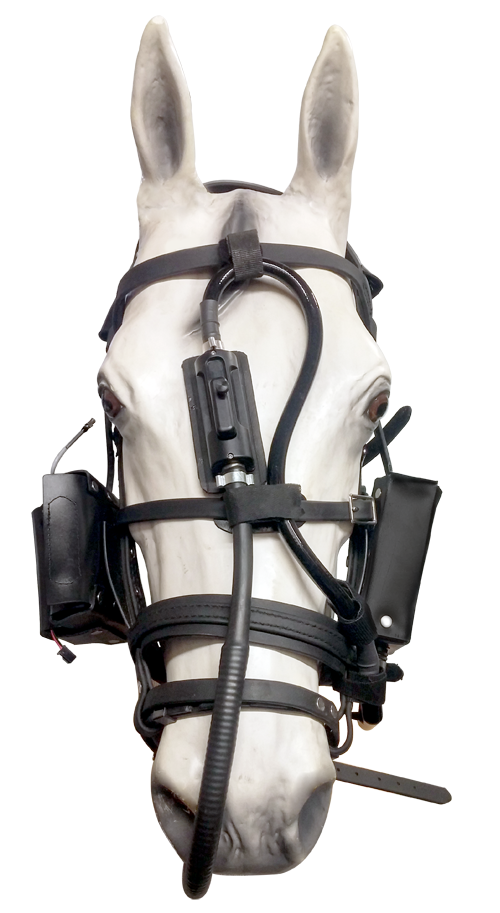 Dynamic Equine Exercise Endoscope