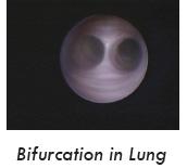 vet nasal endoscope